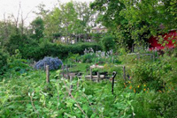 Thumbnail image for Think Like Plants: 6 Functional Design Tips for Your Vegetable Garden