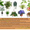 Thumbnail image for 10 Purifying House Plants and their Health Benefits