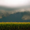 Thumbnail image for No more Monsanto GMO Corn Fields in Hungary