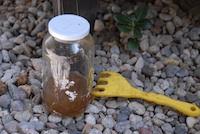 UrbanFig: Using Worm Castings & Worm Tea