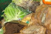 UrbanFig: Compost