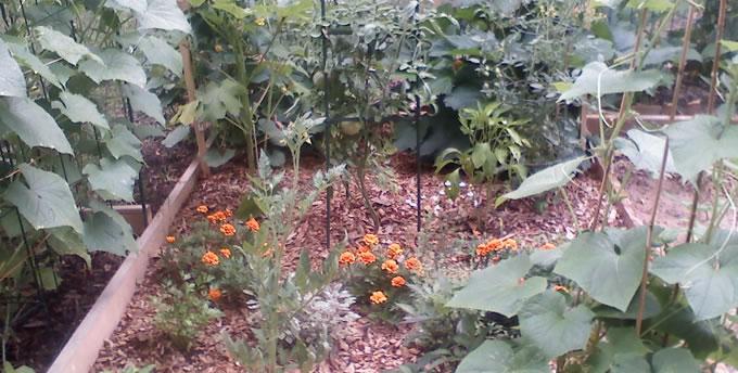 http://urbanfig.com/wp-content/uploads/2011/12/gardenplot.jpg