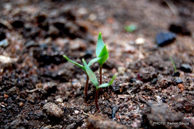 UrbanFig: Soil