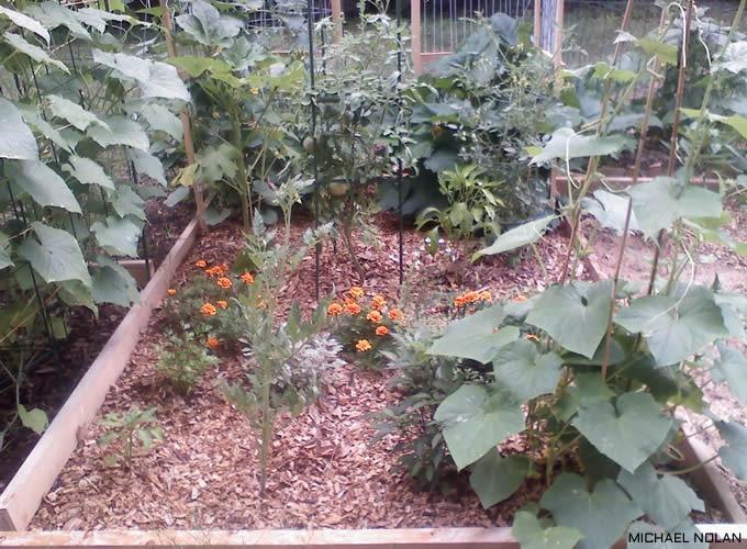 UrbanFig: Companion Planting