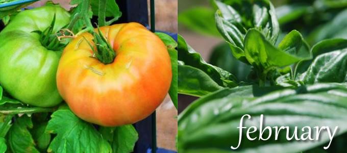 UrbanFig: Tomatoes & Basil