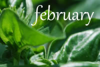 Post image for What to Plant for the Garden in February