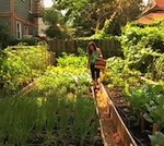 A-Backyard-Farming-Network-In-Brooklyn3