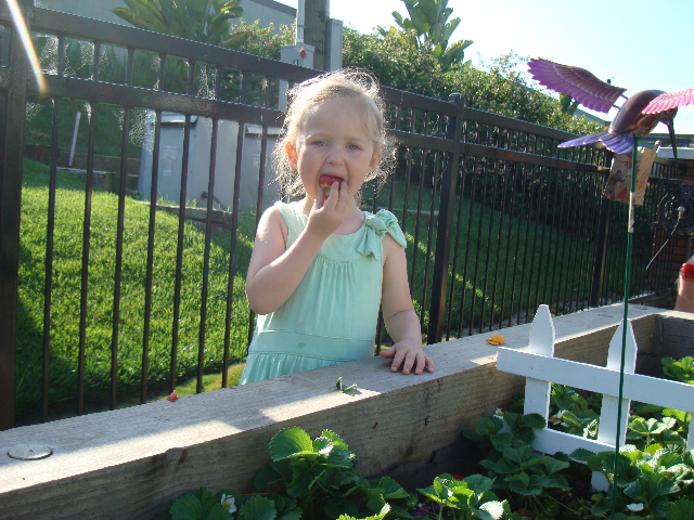 Samantha enjoying fresh strawberries!