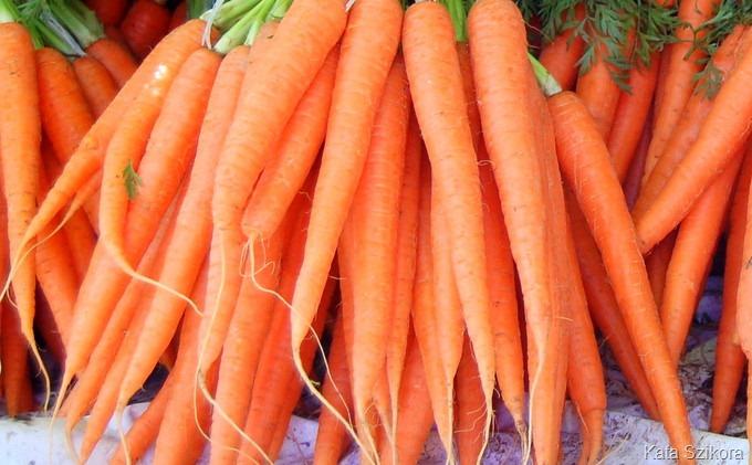 carrot-001