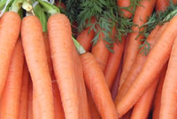 Post image for How to Grow Carrots