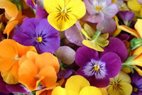 UrbanFig: Pansies & Edible Flowers
