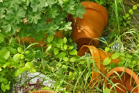 UrbanFig: Terracotta Pots