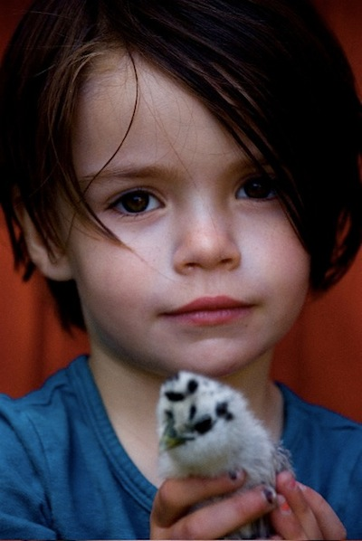 Kids and Chicks 2
