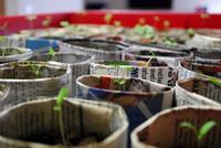 UrbanFig: Seed Starting Basics