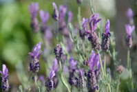 Post image for Healing Herbal Ideas for Your Garden