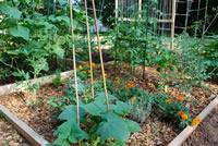 UrbanFig: Urban Gardening