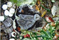 UrbanFig: Cold Weather Composting