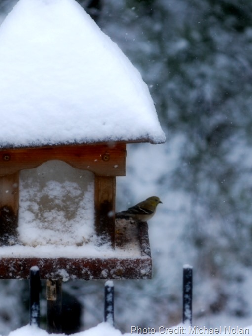 february_snow