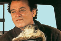 UrbanFig: Groundhog Day