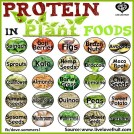 Post image for Protein in Plant Foods