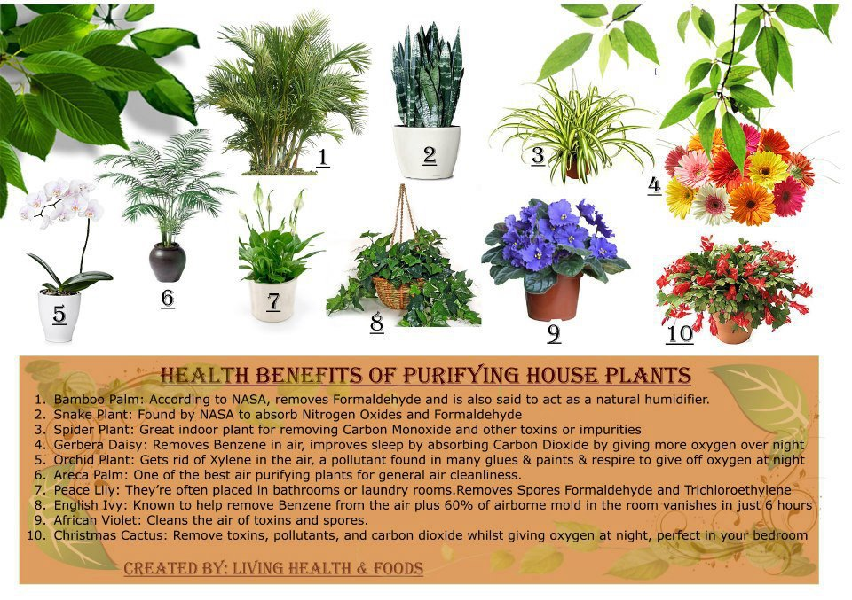 The Health Benefits of 10 Purifying House Plants