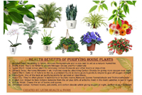 Post image for 10 Purifying House Plants and their Health Benefits