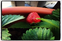 Thumbnail image for The 5 Easiest (and Yummiest!) Fruits to Grow in a Container Garden