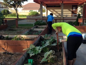 Volunteers Gardening at Queen Park Community Garden